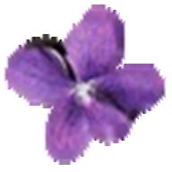 Violet UML Editor logo