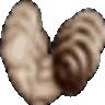 StrongDC++ logo