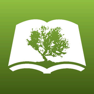 Olive Tree Bible Study logo