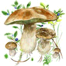 Mushrooms app logo