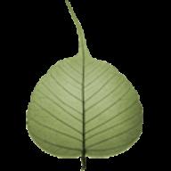 Bodhi Timer logo