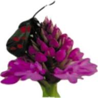 DNADynamo logo