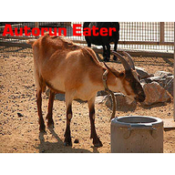 Autorun Eater logo