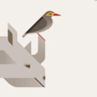 Rhinobird.tv logo