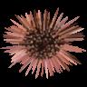 UTM Stripper logo