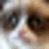 Kittify logo
