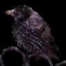 hunt-n-peck logo