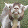 Goat Attack logo