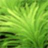 Dream Aquarium logo