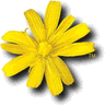 Amiga Forever logo